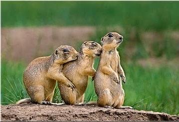 Trois écureuils se font un câlin